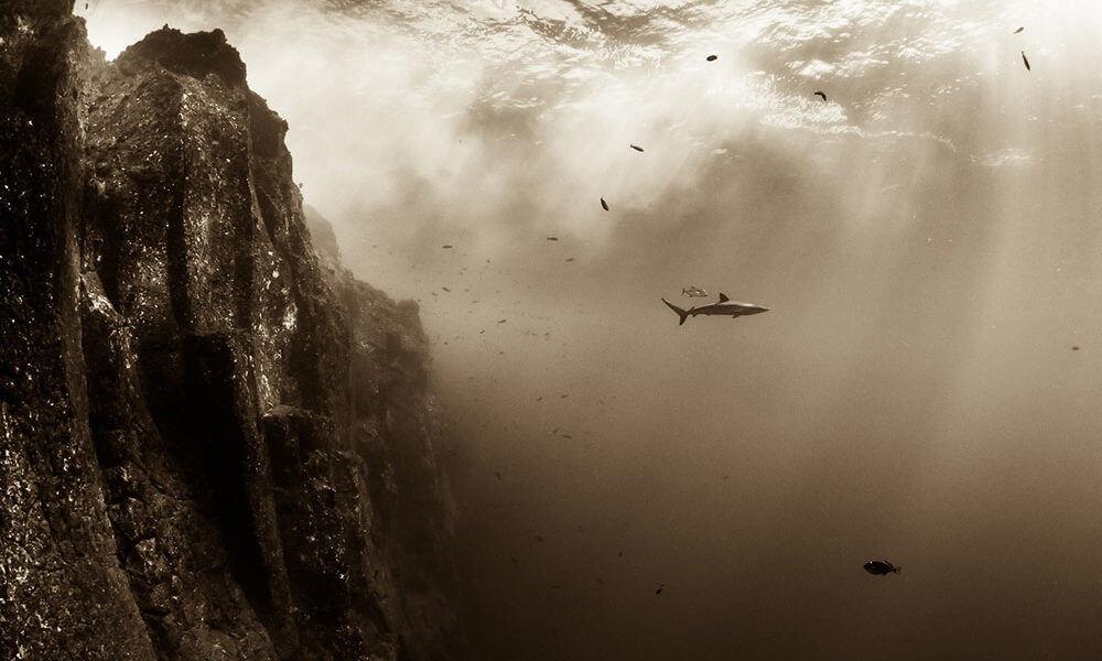 Fotógrafo Christian Vizl Tercer Lugar en Sony World Photography Awards